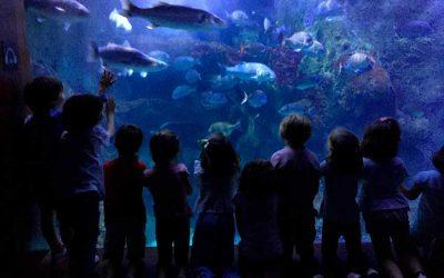 Itsasoko animaliak ezagutzen Aquarium-en