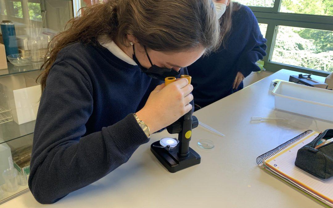 Alumnas de 1º de Bachillerato participan en un proyecto de ciencia ciudadana